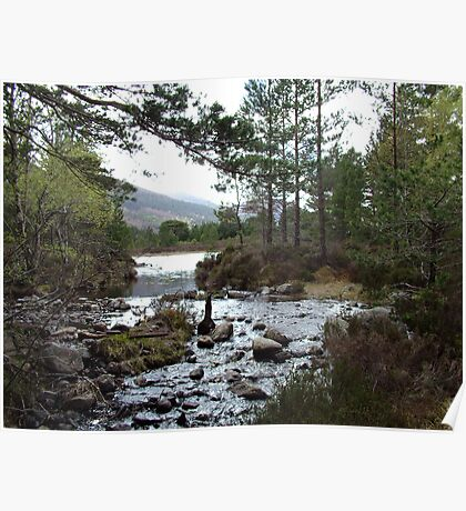 Stream running out of Loch an Eilean Poster