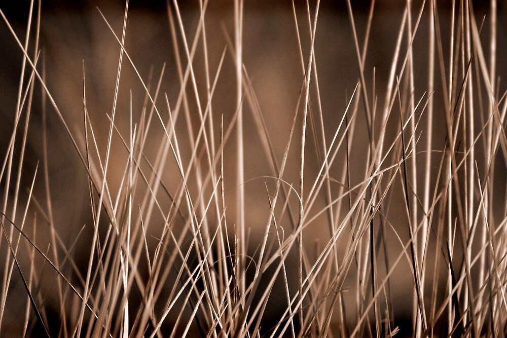 Marram - sepia by Bev Evans
