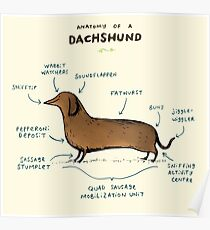 Anatomy of a Dachshund Poster