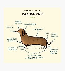 Anatomy of a Dachshund Photographic Print