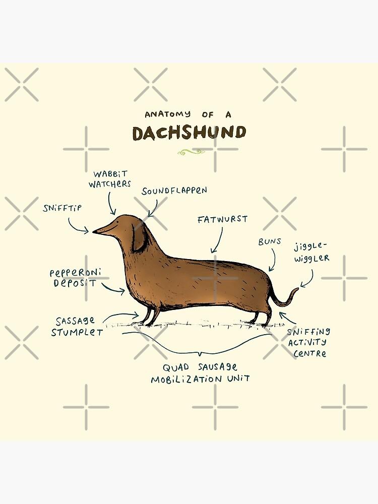 Anatomy of a Dachshund by SophieCorrigan