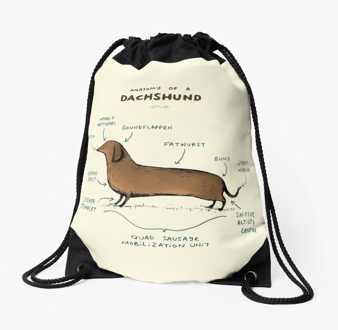 Anatomy of a Dachshund by Sophie Corrigan