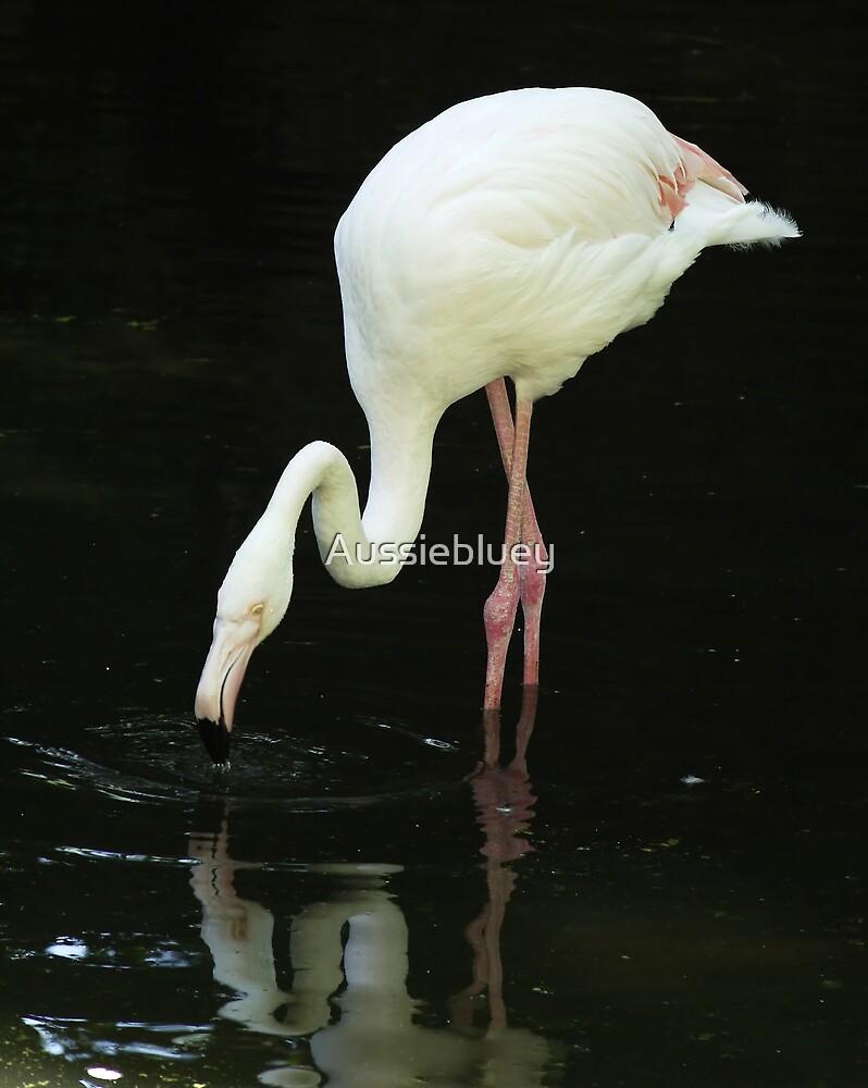 Flamingo reflections, 2 by Aussiebluey