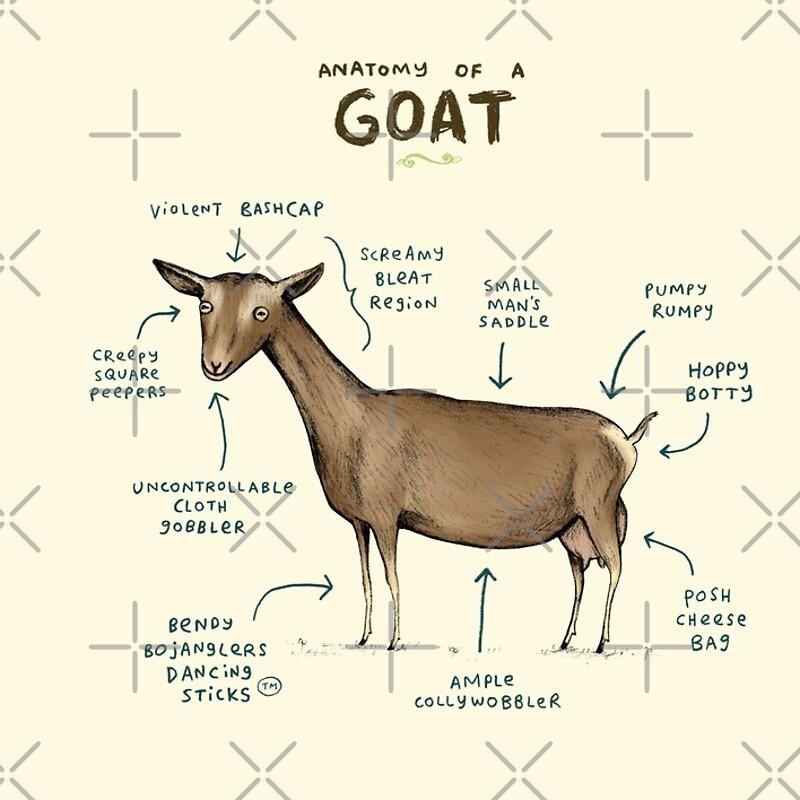 Increíble Boer Anatomía De Cabra Inspiración - Imágenes de Anatomía ...