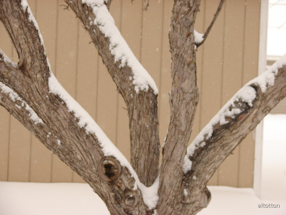 Snow On The Trunk by eltotton
