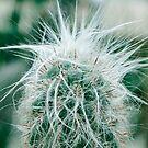Kaktusfotografie 3 von VanGalt