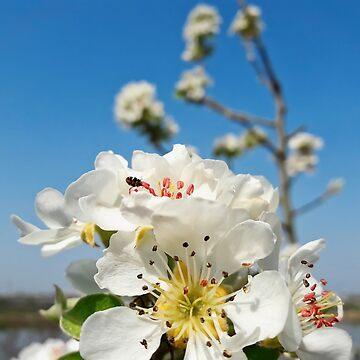 Flores de primavera de psychoshadow