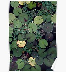 Lily Pads Poster