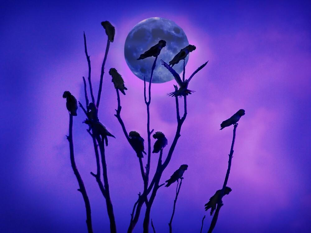 Midnight Cockatoos by Frank  McDonald