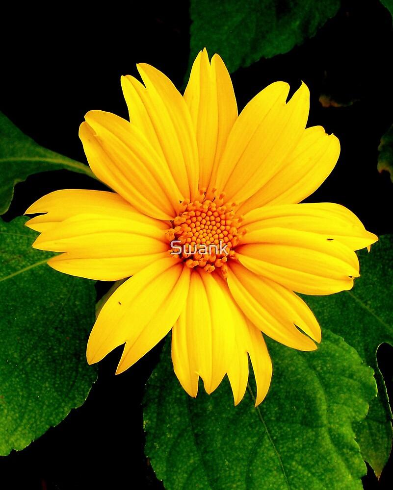 Bright & Sunny by Swank