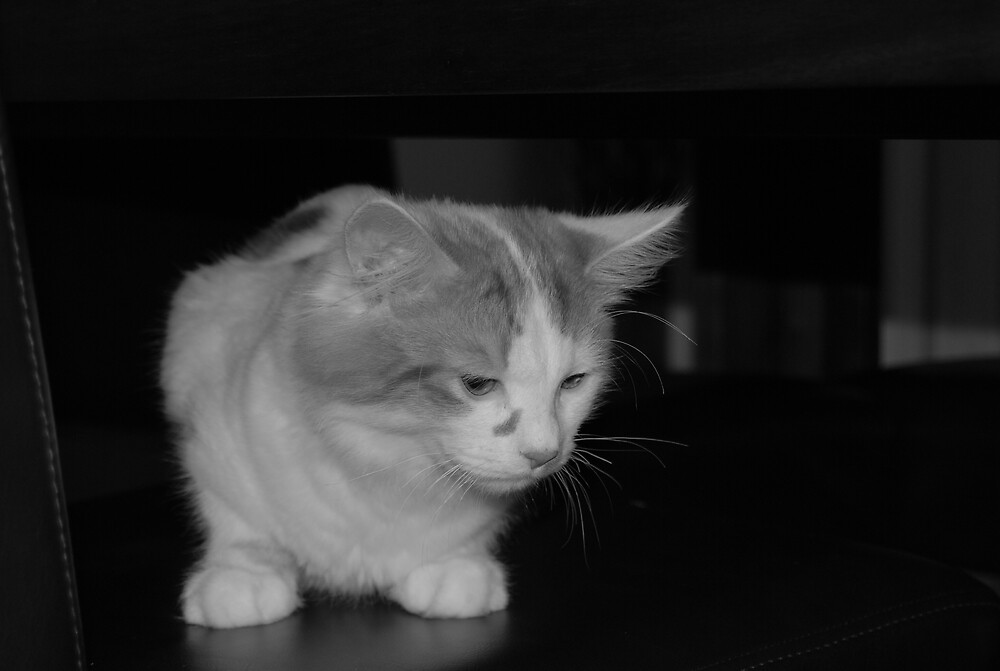 The Curious Cat by jonord1