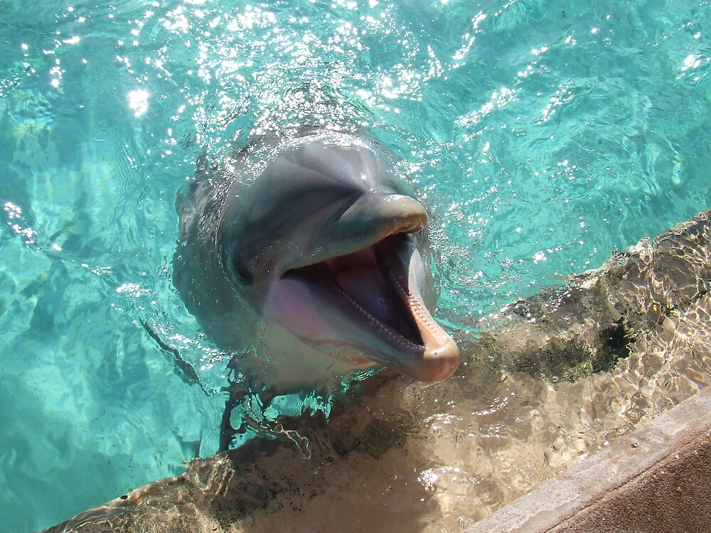 dolphin by charleycan