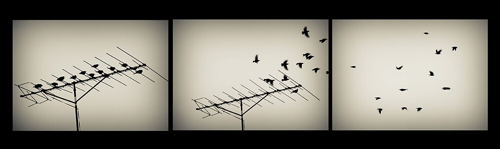 Fly Away by Shawn