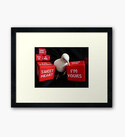I'm A Love-A-Dove - White Collard Dove - NZ Framed Print