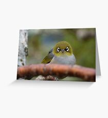 What now! Silvereye - NZ - Southland Greeting Card