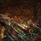 Starfish 2 by Kathleen Madrid
