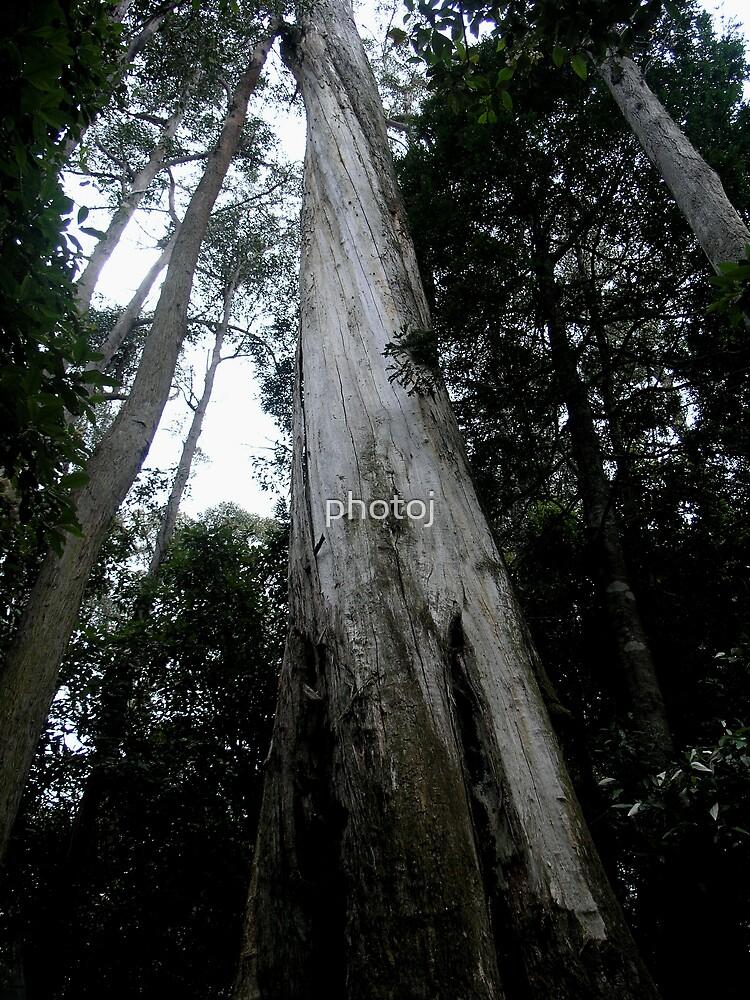 photoj Tas Liffy Falls Reserve by photoj