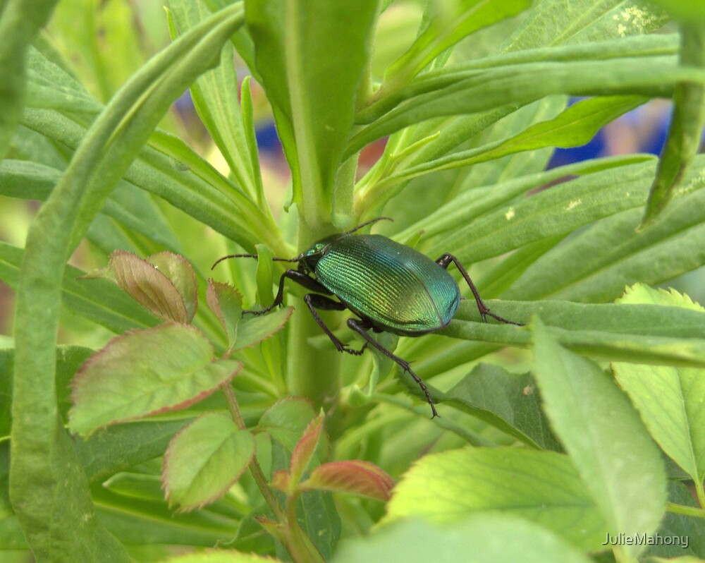 Stink Beetle by JulieMahony