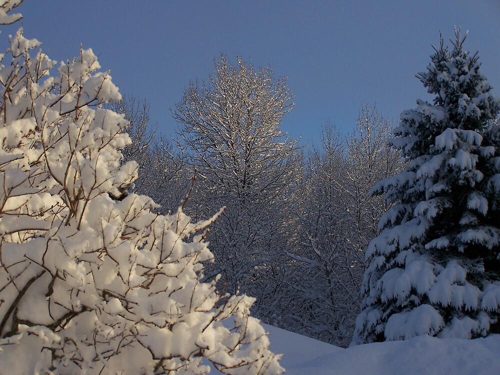 SunLit Trees by Gene Cyr