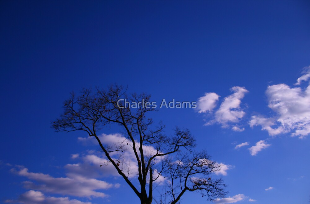 Reaching for the Sky by Charles Adams