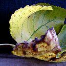 Fig leaf by Northcote Community  Gardens