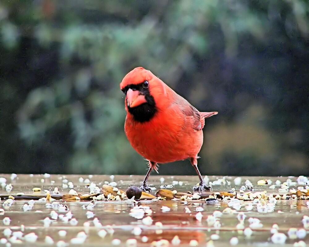 Cardinal 2 by Pat Moore