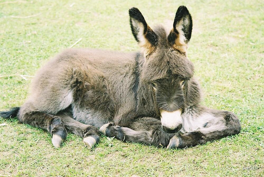 Little Donkey by s4r4h