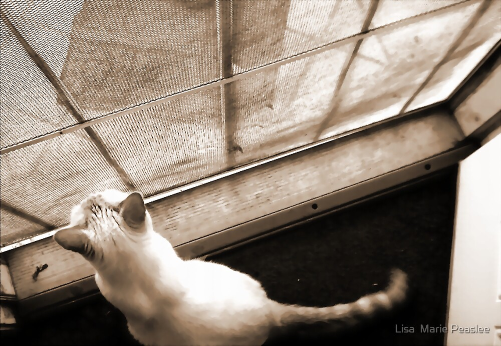 Hello Outside by Lisa  Marie Peaslee