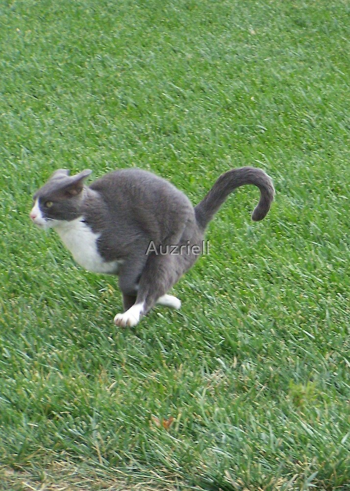 Air~Kitty by Auzriell