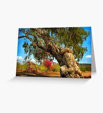 Ancient Paperbark Tree Greeting Card