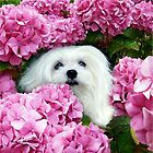 Snowdrop the Maltese - Cheeky Face ! by Morag Bates