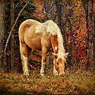Buckskin Horse in Autumn by PineSinger