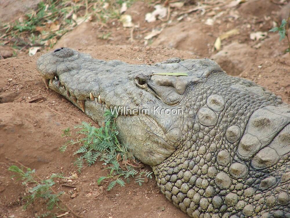 Croc by Wilhelm Kroon