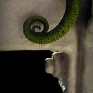 Tail end by iamelmana