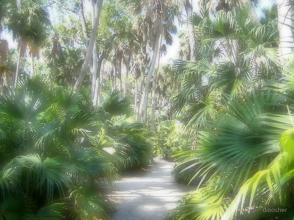 Pathway To The  Tropics by dmosher