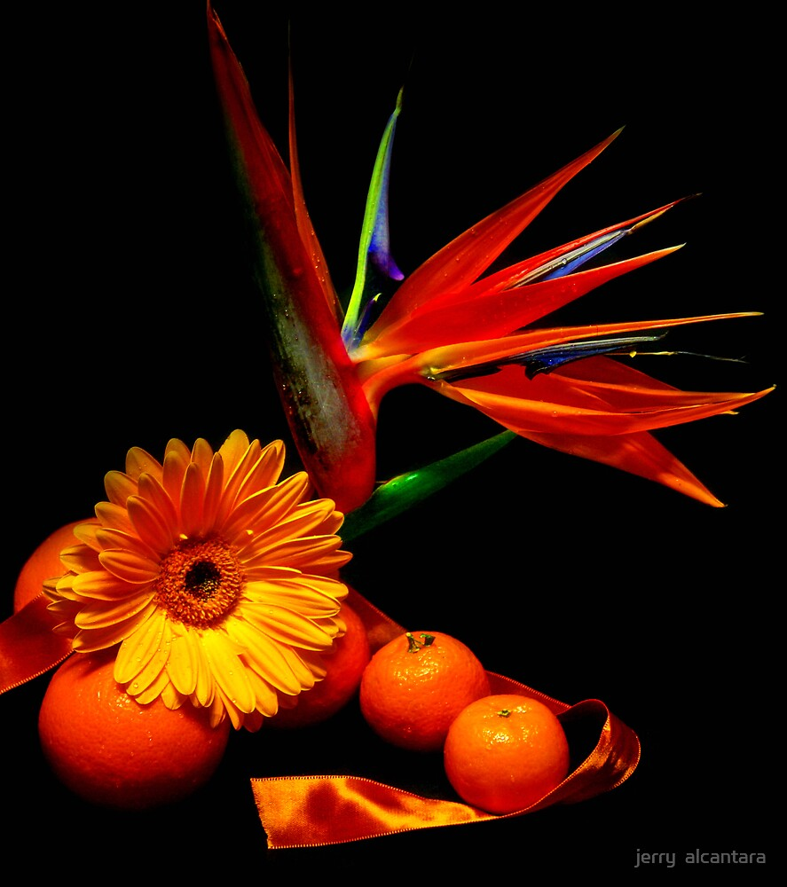 Orange Delight by jerry  alcantara