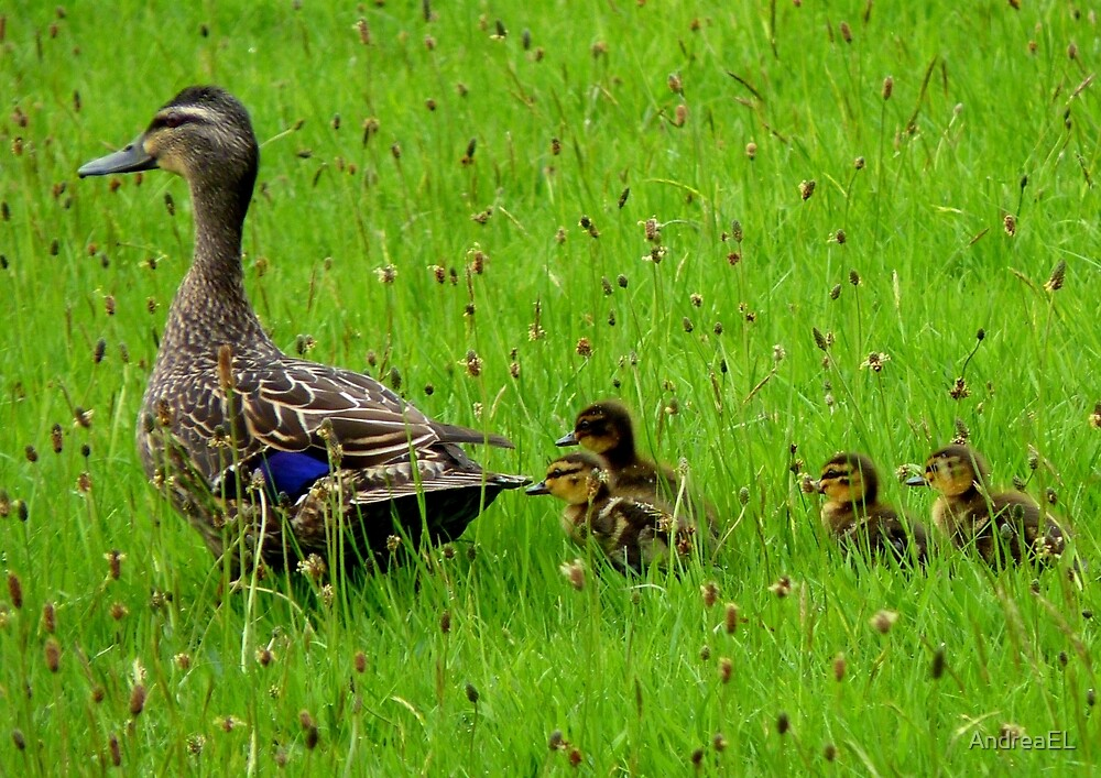 Come on Kids Move Along! - Mallard Ducks - NZ by AndreaEL