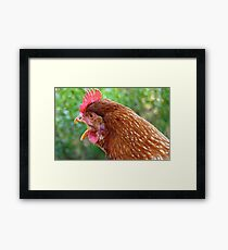I Laid an EGG! - Red Hen - NZ - Southland Framed Print