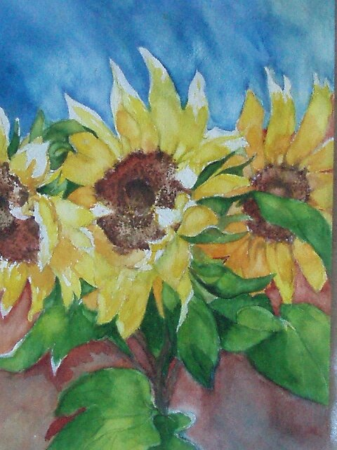 Sun Flower Watercolor. by aStouffersArt