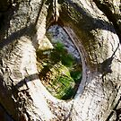 Old Tree Trunk by Shulie1