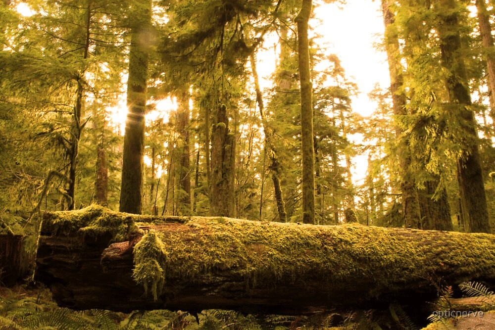 Cathedral Grove by opticnerve