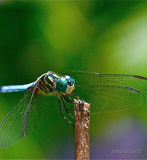 Blue Visitor by autumnwind