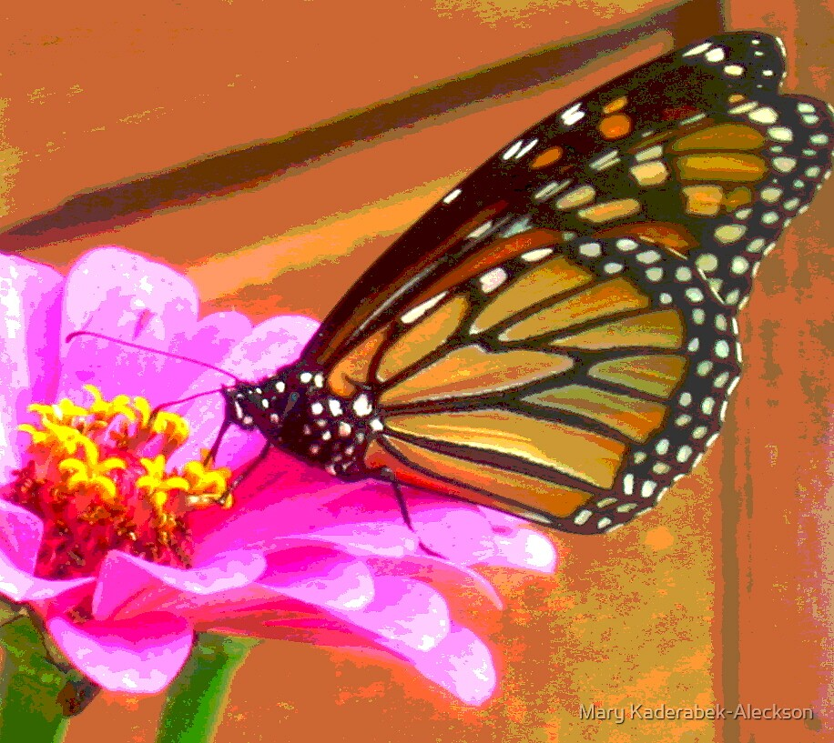 Monarch on Pink Flower by Mary Kaderabek-Aleckson