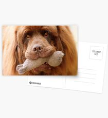 Pleeeese! come play with us - Big Doggy - NZ Postcards
