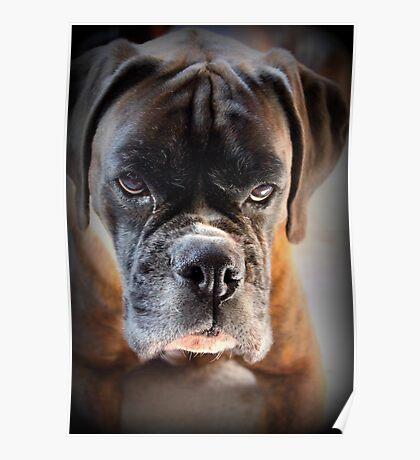Gehen Sie voran .... Machen Sie meinen Tag ~ Boxer Dogs Series ~ Poster