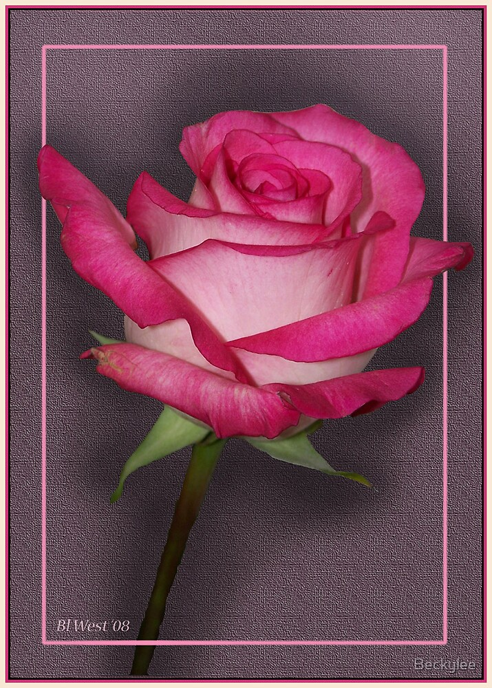 The Pink Rose by Beckylee