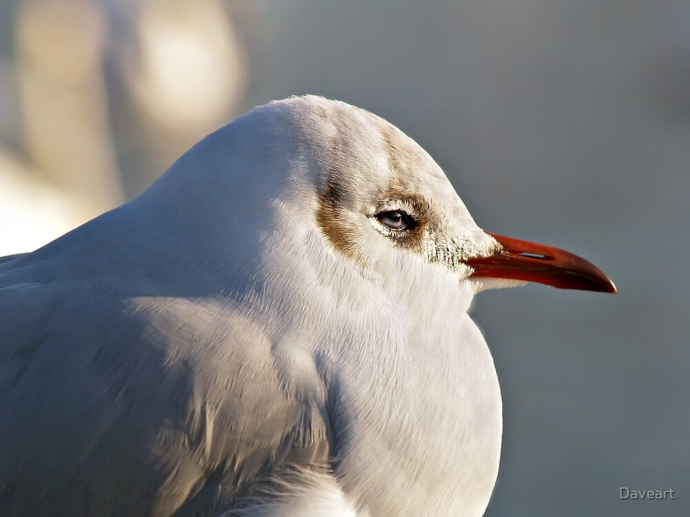 Portrait of a Gull by Daveart