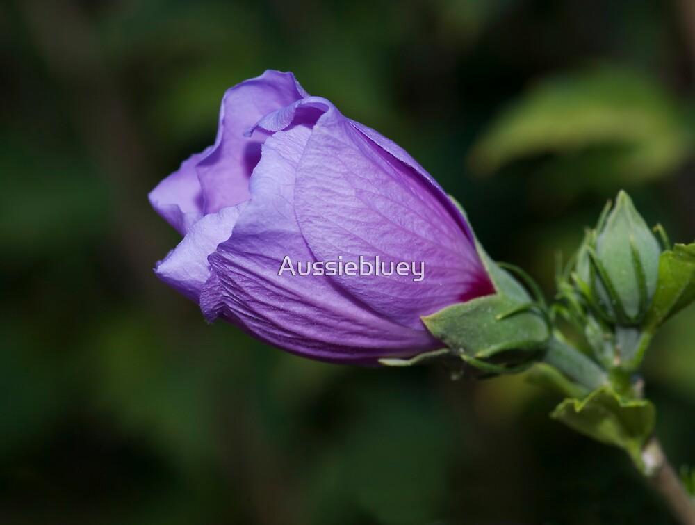 Petals in Purple. by Aussiebluey