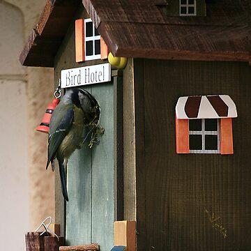 Bird Hotel by FrankieJo
