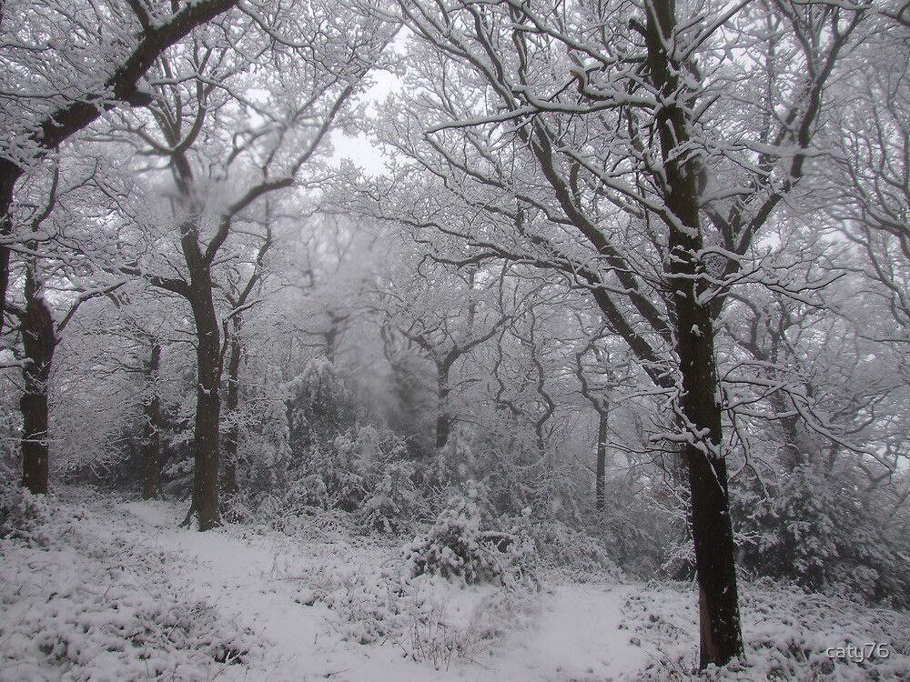 Winter Woodland by caty76